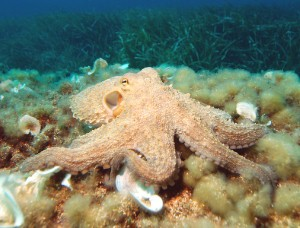 Tody has been inspired by the mutli-armed octopus. (Image: Albert Kok)